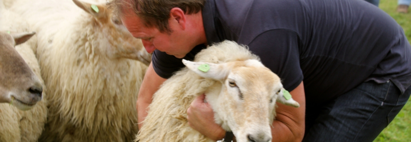 Header image Schapen drijven - Downsouth Events - 2